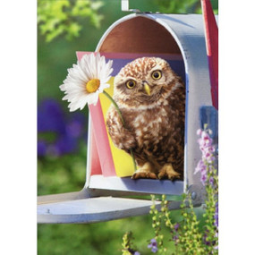baby owl in mailbox | thinking of you