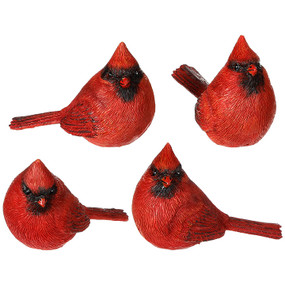 small sitting cardinal