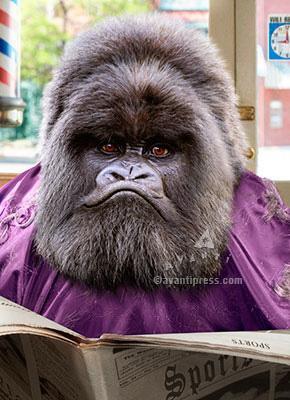 greeting card, father's day, ape, hair cut, grey hair