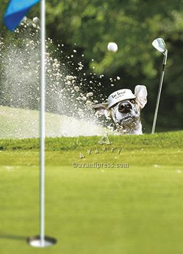 greeting card, father's day, dog, sand trap, golf