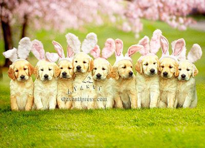 Puppies, bunnies, Easter, Happy Easter