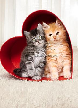 kittens in a  heart box, valentine's day, hugs and kittens