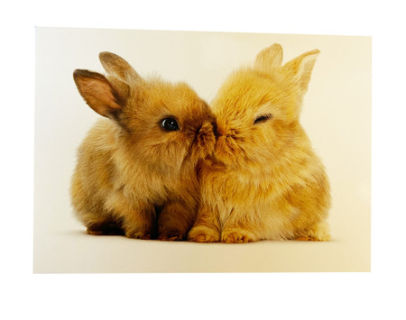 bunnies, love, valentine's day, some bunny loves you