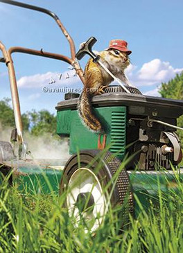 chipmunk  lawnmower | father's day