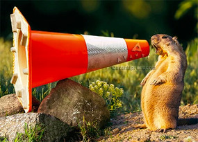 groundhog construction cone | congratulations