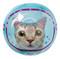 cat beach ball