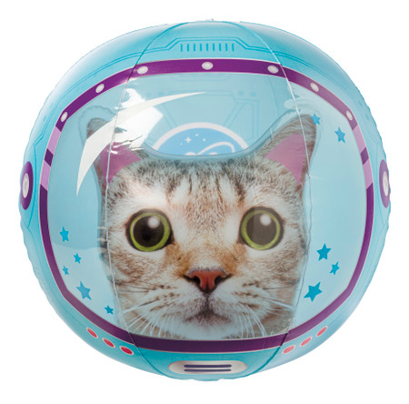 cat beach ball