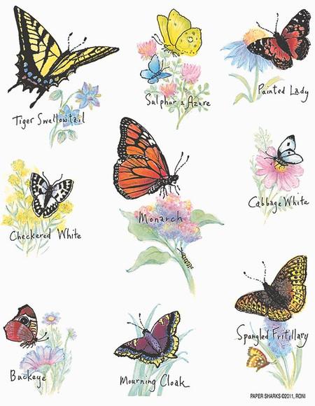 "north american butterflies flour sack towel, Size: 28"" x 29""."