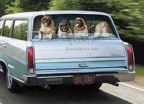 dogs in station wagon birthday card