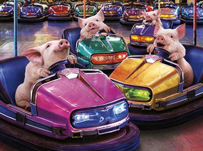 bumper car pigs birthday card