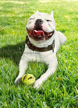 smiling dog with ball birthday card