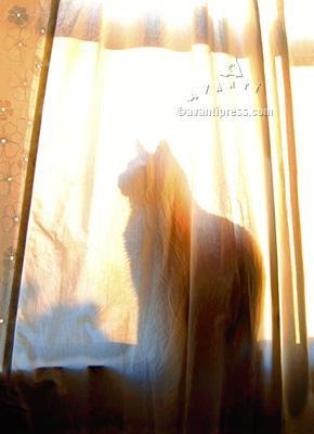 silhouette cat pet sympathy card