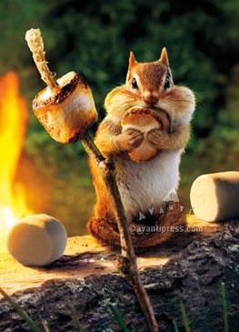 chipmunk roasts marshmallows birthday card