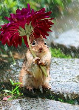 chipmunk with flower umbrella get well card