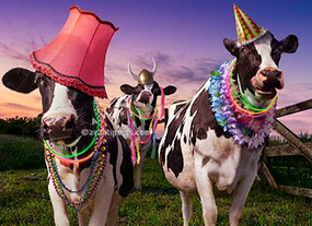 party cows birthday card