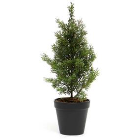 cedar tree in black pot