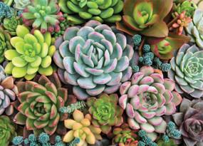 succulent garden jigsaw puzzle