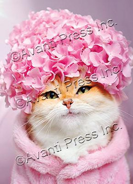 kitty cat hydrangea birthday card