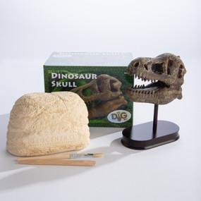 dinosaur skull excavation kit