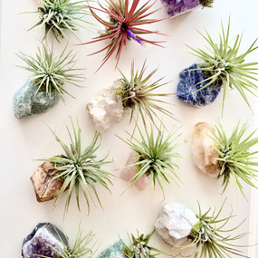 crystal air plant zen garden