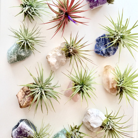 crystal air plant zen garden
