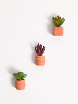 potted succulent magnet set