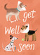 doggy injuries get well