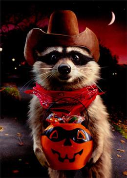 racoon cowboy trick or treat | halloween