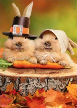 bunny pilgrims | thanksgiving