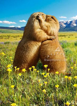 prairie dogs kissing anniversary card