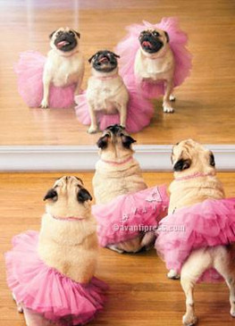 Go ahead and twirl, 'cause you are tutu fabulous! Happy Birthday