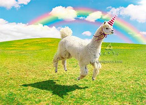 Inside: Hope your Birthday is Rainbows & Sunshine & Glitter & Magic!!!!