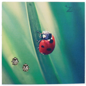 "Silver ladybug post earring on ladybug on a leaf picture card.  • Post earrings finished in shiny silver plate • Stainless steel posts • Carded on glossy Picture Perfect card with chalkboard design • Great novelty gift for the ladybug lover  Size:   3/8"" x 3/8"", 3 1/4"" x 3 1/4"" card   Materials:   Silver Plated, Surgical Steel Post"