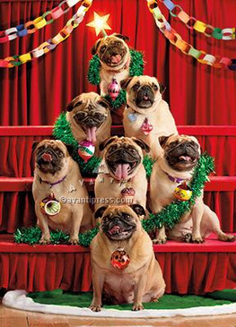Seven pugs-a-posing! Merry Christmas