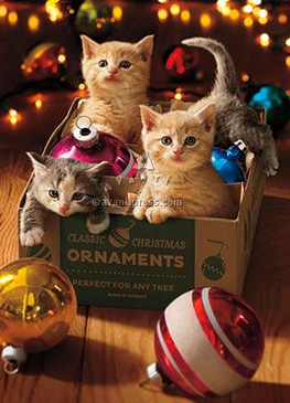 kittens in ornament box | christmas card