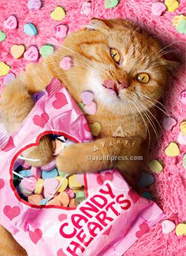 sweetheart cat   valentine's day