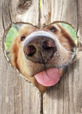 dog nose fence | valentine's day