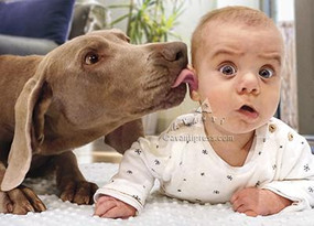 dog licks baby's ear birthday card