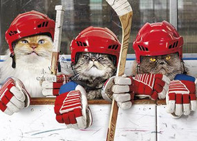 hockey cats birthday card