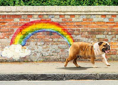 dog rainbow birthday card