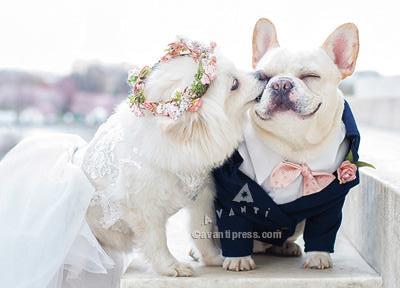 wedding dogs wedding card, bulldogs