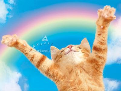 kitten rainbow congratulations card, graduation card