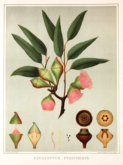 Original Chromolithographs published 1882-90