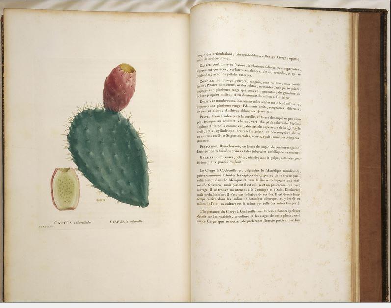 Plantarum Succulentarum historia