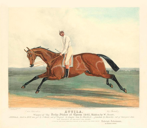 """Atilla , Breed by Colonel Hancox, Winner of the Derby, 1842, Attila Winner of the Derby Stakes at Epsom 1842, Ridden by W. Scott. Attila-bred in 1839, was got by Colwick, out of progress, by Langar, dam by Blacklock-  Grandam by Knowsley, out of Surveyor"" Archival Limited Giclee of the original hand coloured Aquatint engraving lithograph by  John Harris III (1811-1865) who was working at Akermann's Repository at the time."