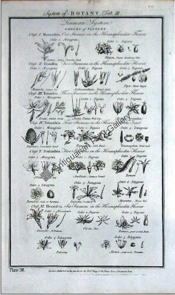 Botany flowers 1788 hogg 3 Original Antique Print