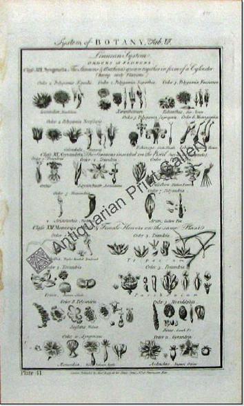 Botany flowers 1788 hogg 6 Original Antique Print