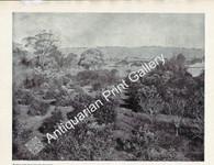 Botany Garden Orangery near Adelaide 1897 Antique Print
