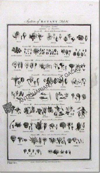 Botany Flowers  Published London 1788 on Flax/Hemp laid paper.