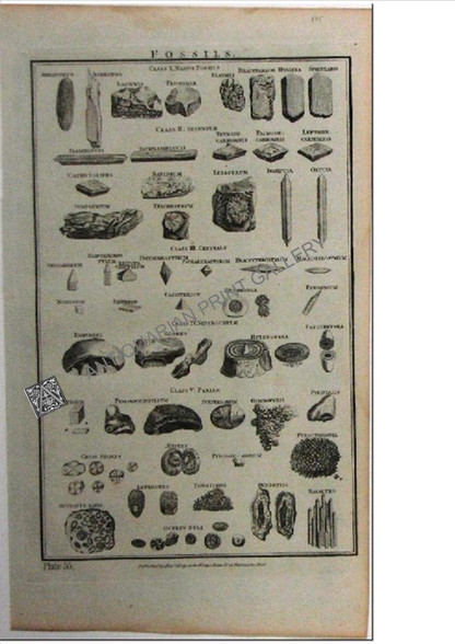 Science Fossils 1788 Copper Engraving